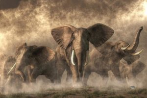Painting of elephants running towards the viewer