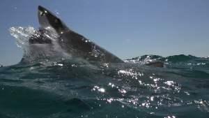 【映画】『ケージ・ダイブ』感想 :これはサメ映画と言うかなんというか...
