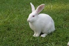 兔子的種類 - ★仔仔♀來教你養兔兔~☆