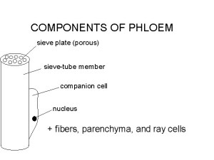 Lecture Notes No 1 for Biology of Plants