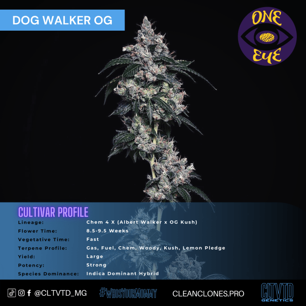 Dog Walker OG