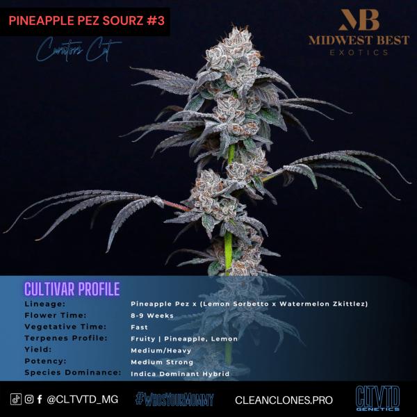 Pineapple Pez Sourz_cultivar profile