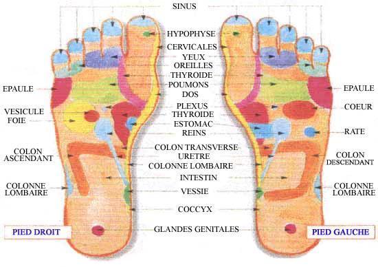 reflexologie des pieds