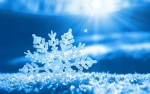 flocon-neige