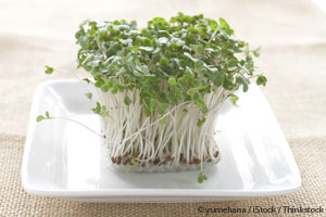 broccoli-sprouts-on-plate