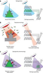 optogenetics p4