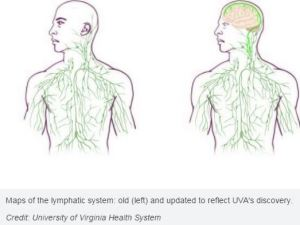 brain and immune system link