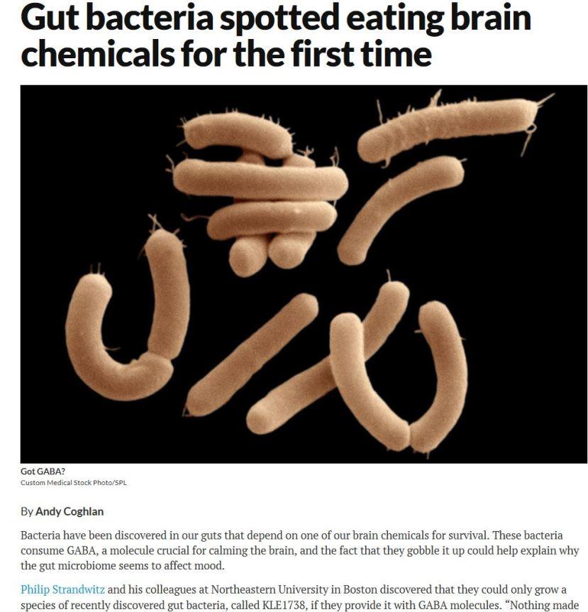 gut bacteria eats GABA