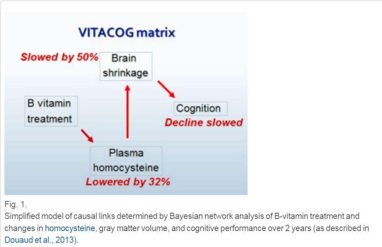 b vitamin and brain