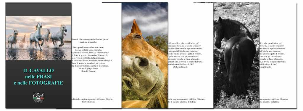 Our Books on Horses Photo