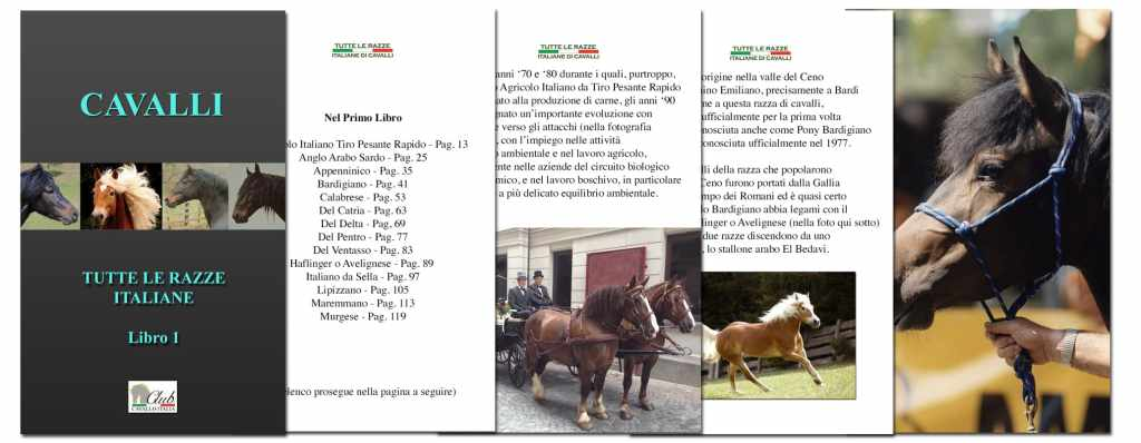 Our Books on Horses Races