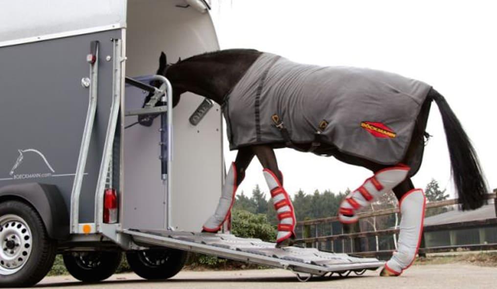 Horse in the van