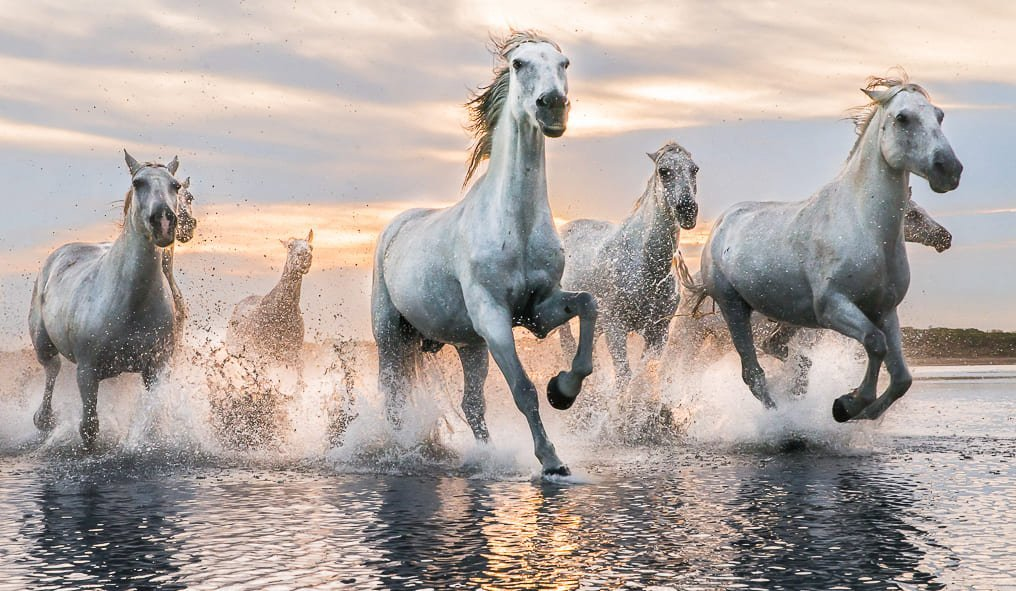 Horses and their elegance