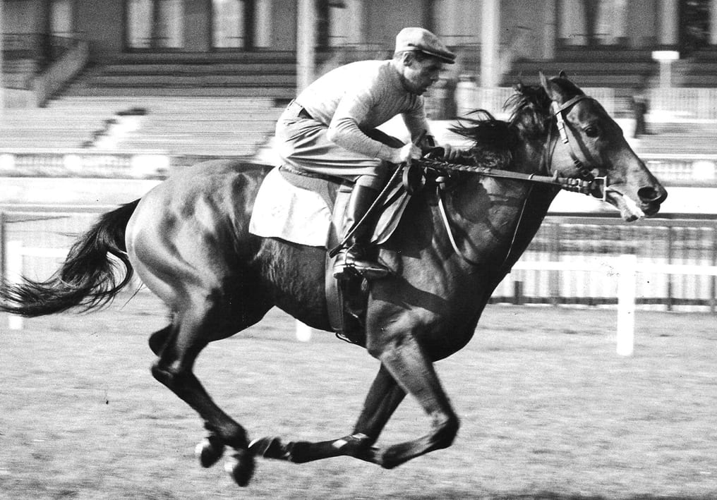The Great Ribot
