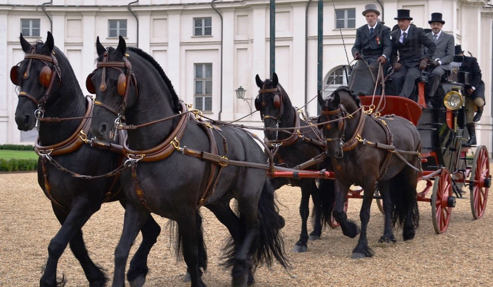 Friesian Horse and carriage
