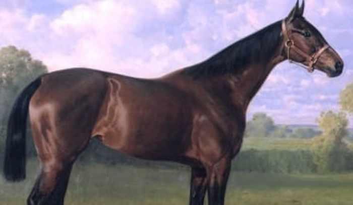 Thoroughbred Horse Paper Bracelet