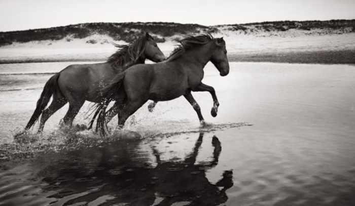 Two Horses Bracelet 5