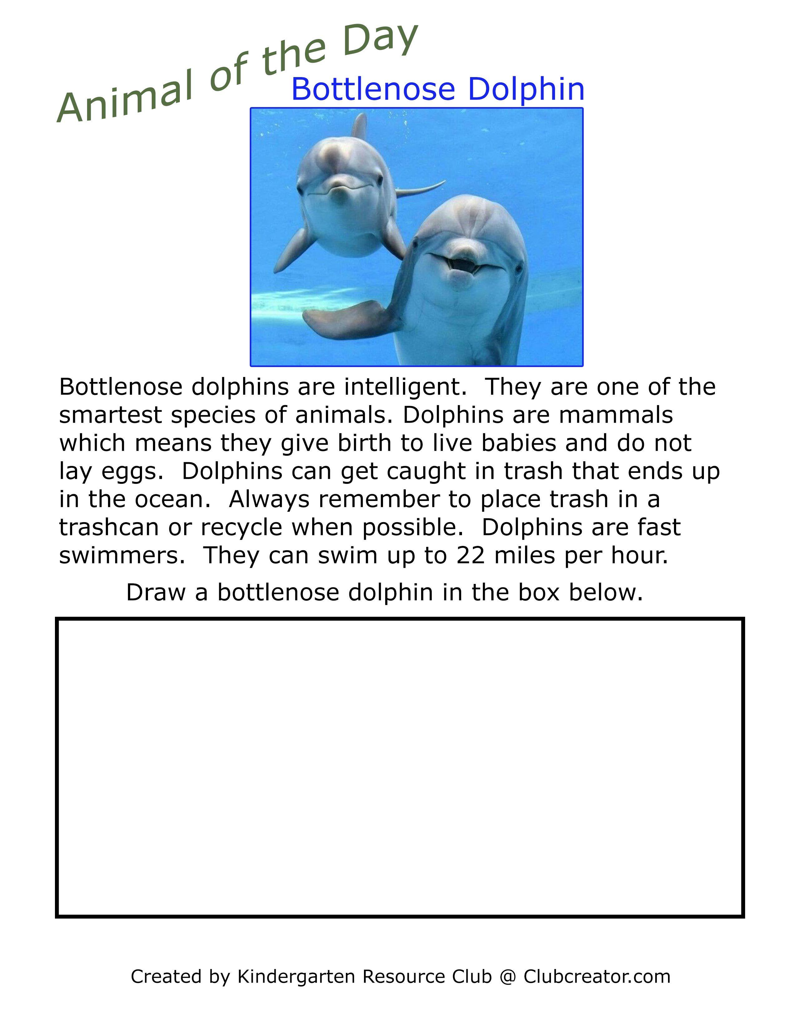 Animal Worksheets Homeschool Worksheets