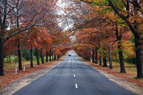 Autumn at Mt Macedon