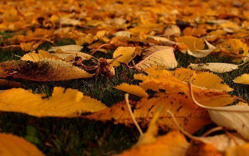Autumn Foliage on Lawn Herbstlaub auf Rasen