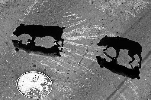 06 The Dogs, por geezaweezer