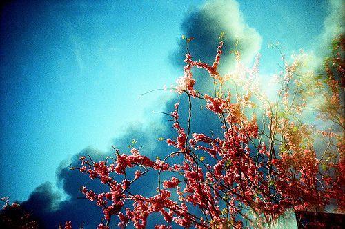 Blossoms in Cloud, por Lomo-Cam