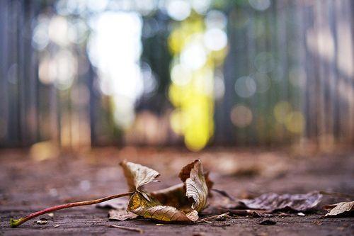 Fallen, por Nanagyei