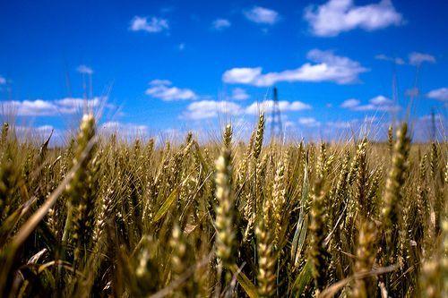 Wheat Field [E-X-P-L-O-R-E-D], por KevinLallier