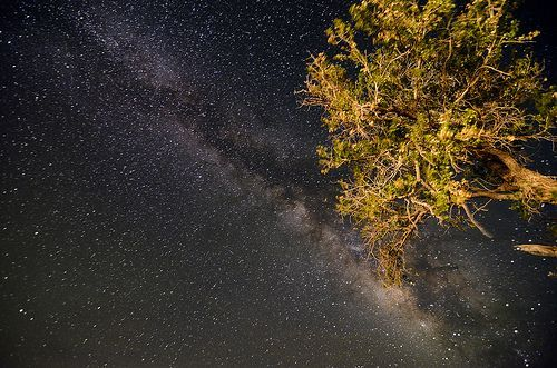 140 That tree is blocking my view of the milky way., por terrypresley