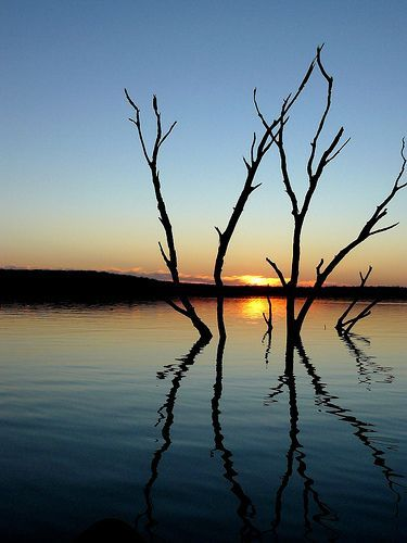 Lake Trees, por FreeWine