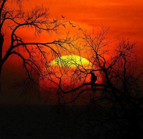 last spring sunset, por Luz Adriana Villa A.