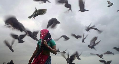 birds, por nandadevieast