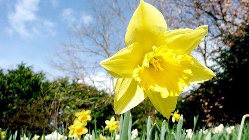 spring, por promanex