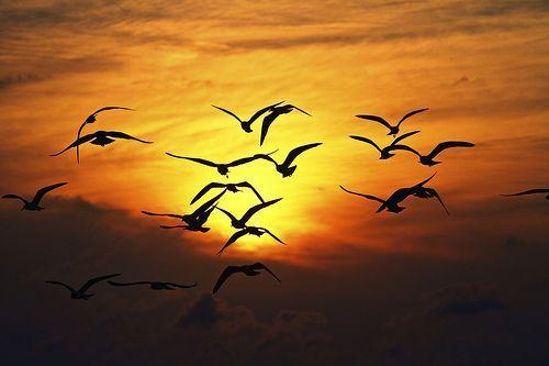 Ode to Birds, por Zach Dischner