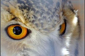 The Eagle Owl Eyes, por Michael Borg (I am Fuji HS20EXR)