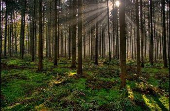 Magic! between the trees, por Luc B