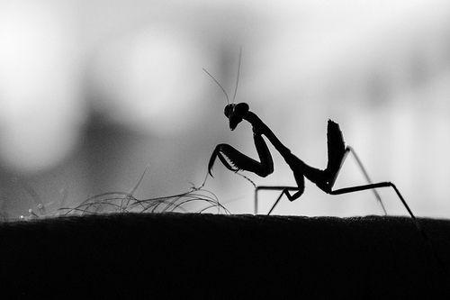 Praying Mantis - Lawn mower, por Lefteris Katsouromallis