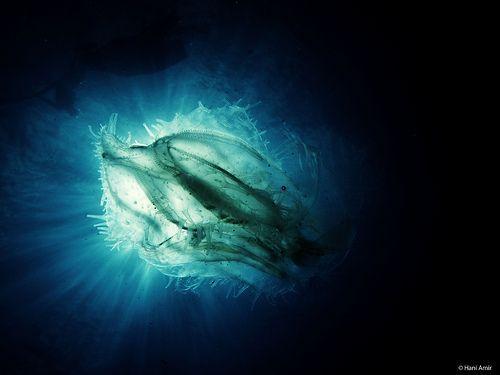 Nebula, por Hani Amir