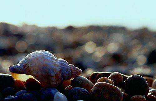 Beach Bokeh, por Doug Wheller