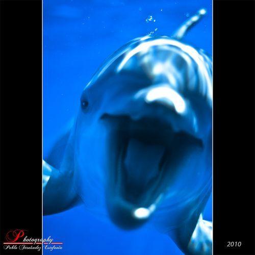 Dolphin attack, por Pablo Fernández
