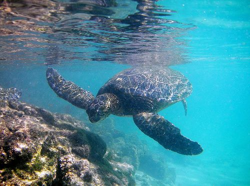 Happy Honu, por Steve Jurvetson