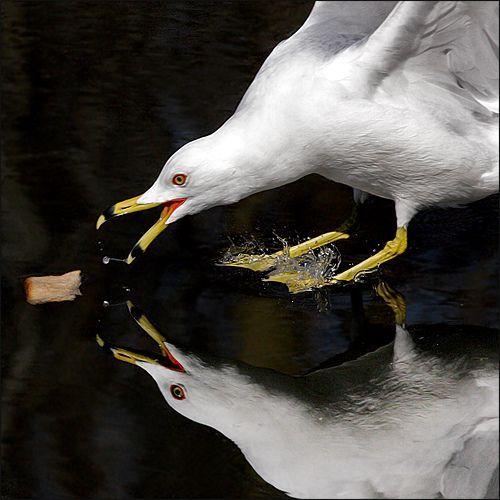 ~ Bait the Birdie ~, por Stuart Williams
