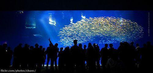 Outer Bay Wing, Monterey Bay Aquarium, por Christopher Chan