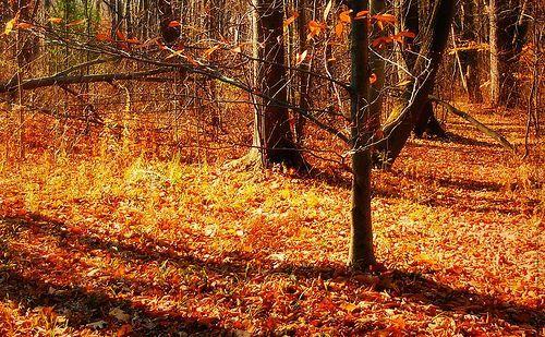 Autumn in New York, por blmiers2