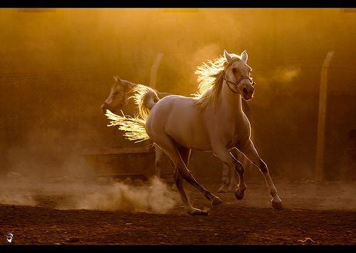 pride, por Mustafa Khayat