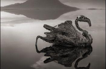 Aves petrificadas de Nick Brandt