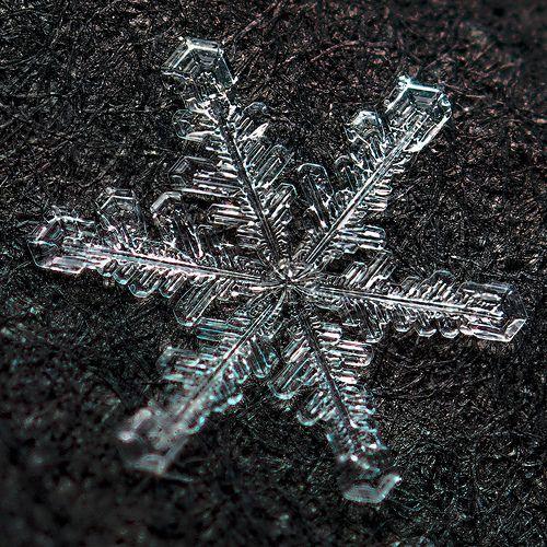 Snowflake II, por Steve Begin