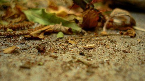 Fotografía de Naturaleza Muerta