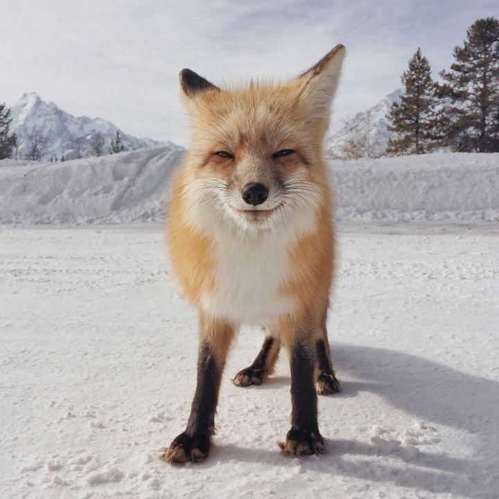 Mejor Foto categoría: Animal de Michael O'Neal de San Francisco, California