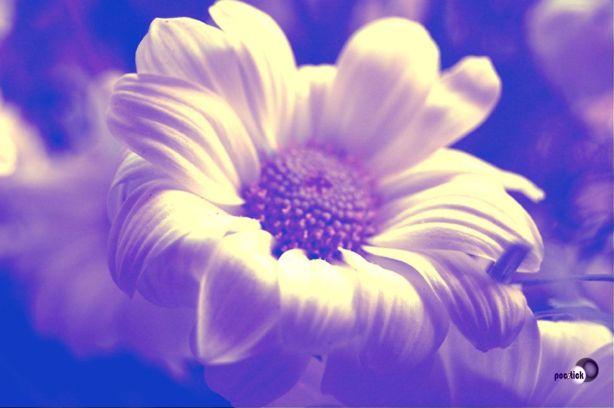 Flores de Colores Raquél Salcedo